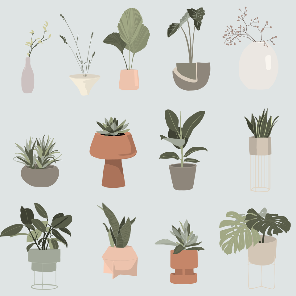 flat vector indoor plants