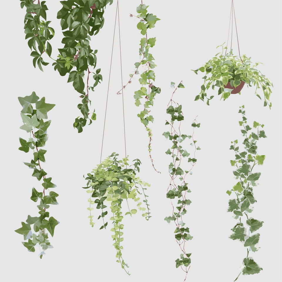 Free Vector plants  download