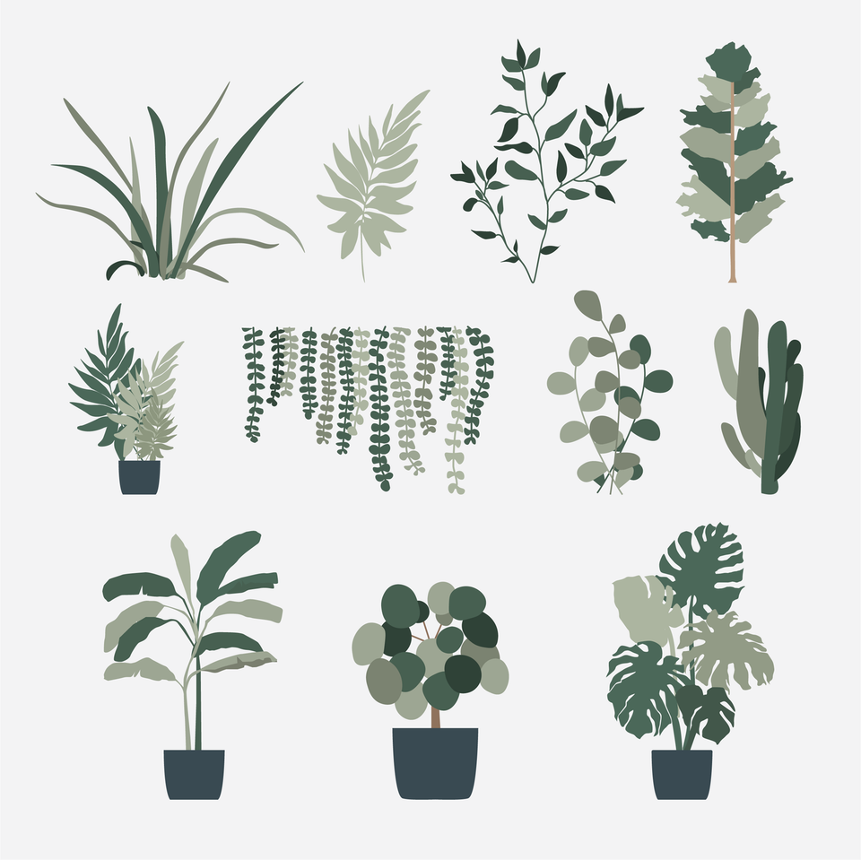 vector plants illustration