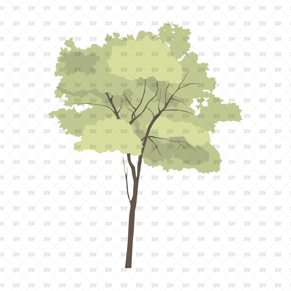 Flat Vector Trees & Plants