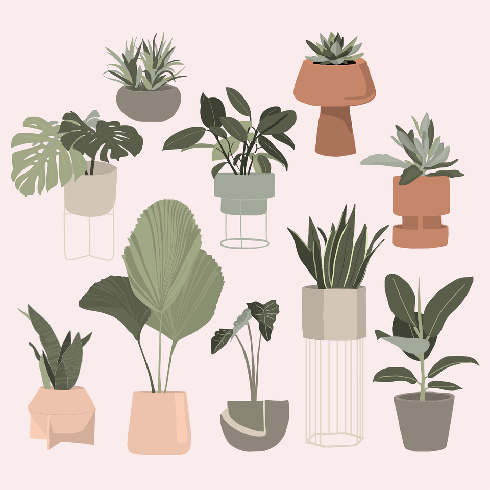 Interior potted plants vector