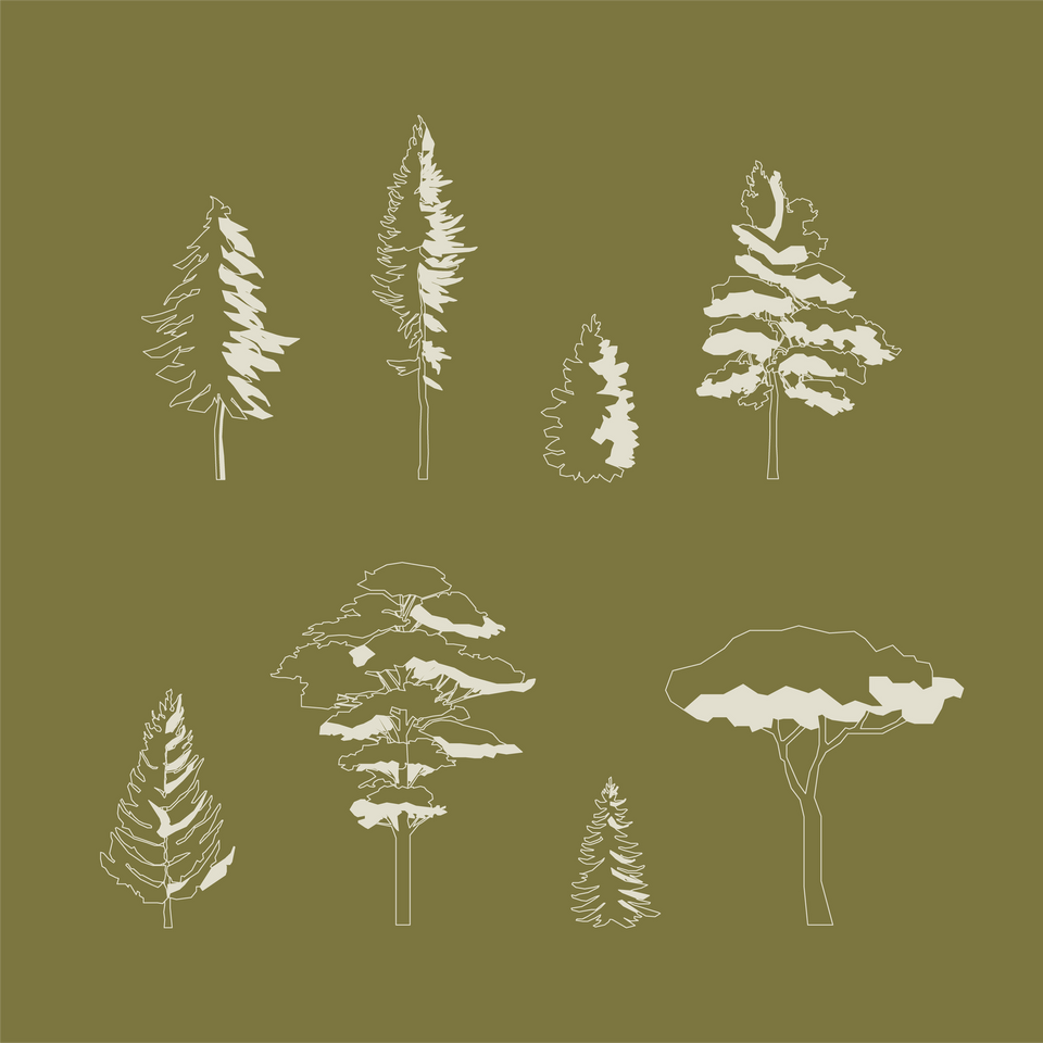 cad blocks pine trees free download