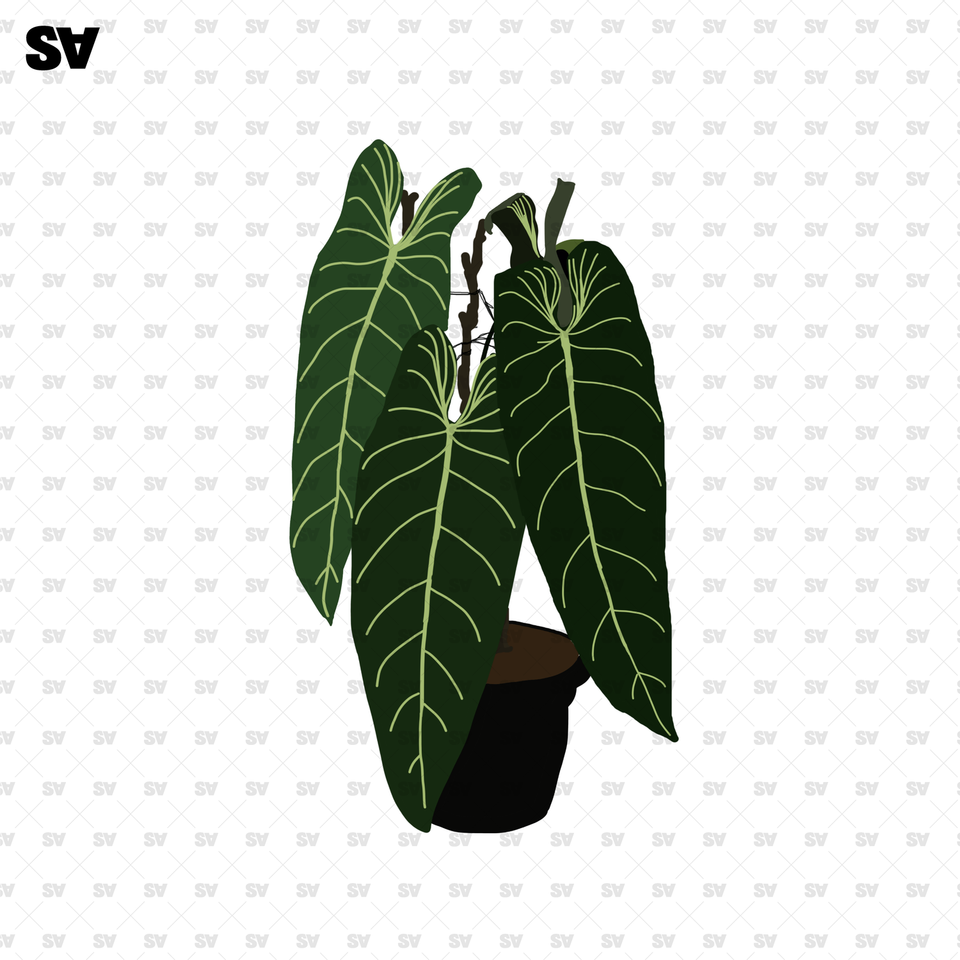home plants png