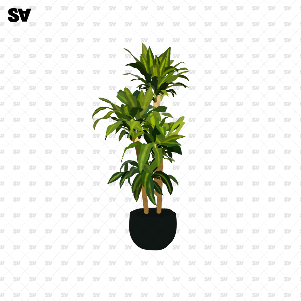 plant png transparent