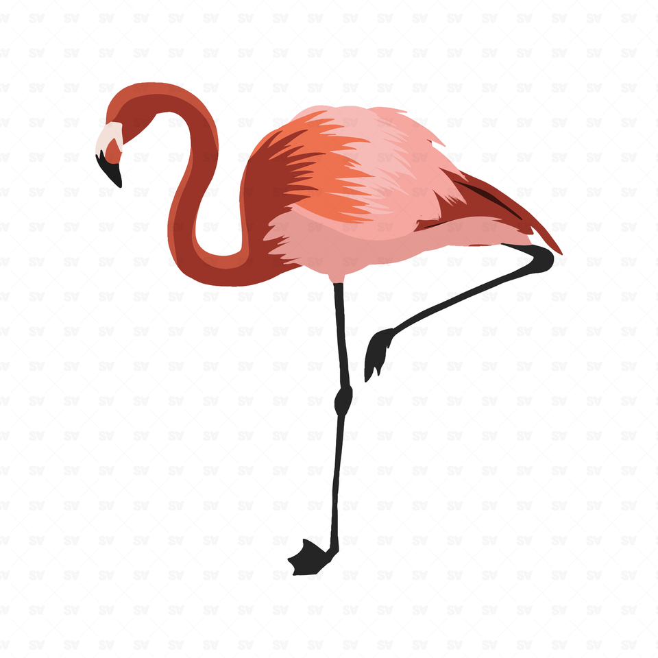 png vector flamingo