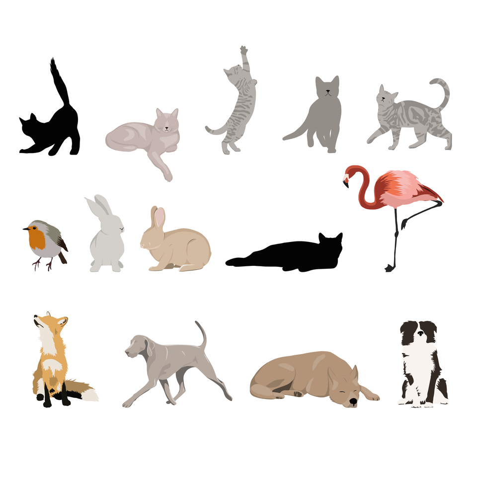 flat vector animals pack