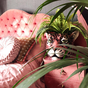 Italian ceramic planter in the shape of a leopard head place on a bedside table with fern plant inside to show use and styling