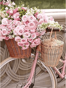 Rose and Bicycles