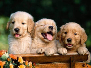 3 Cute Puppies