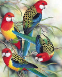 Colorful Birds On The Tree