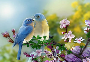 Pretty Blue Birds