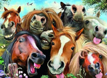 Load image into Gallery viewer, SELFIES - HORSING AROUND