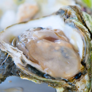 Malepeque Fresh Oysters  - 50 per Case
