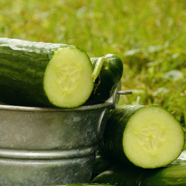 Long English Cucumber  2-PK