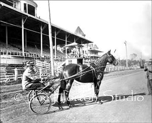 Harness Racing with Rider, Horse and Carriage
