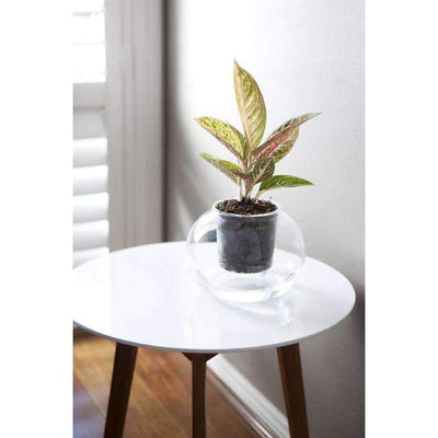 Clear Glass Pot X-Large - Eden Gardens