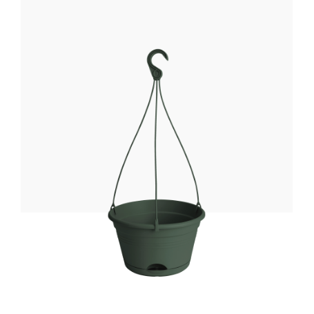 Green Basics Hanging Basket - Eden Gardens