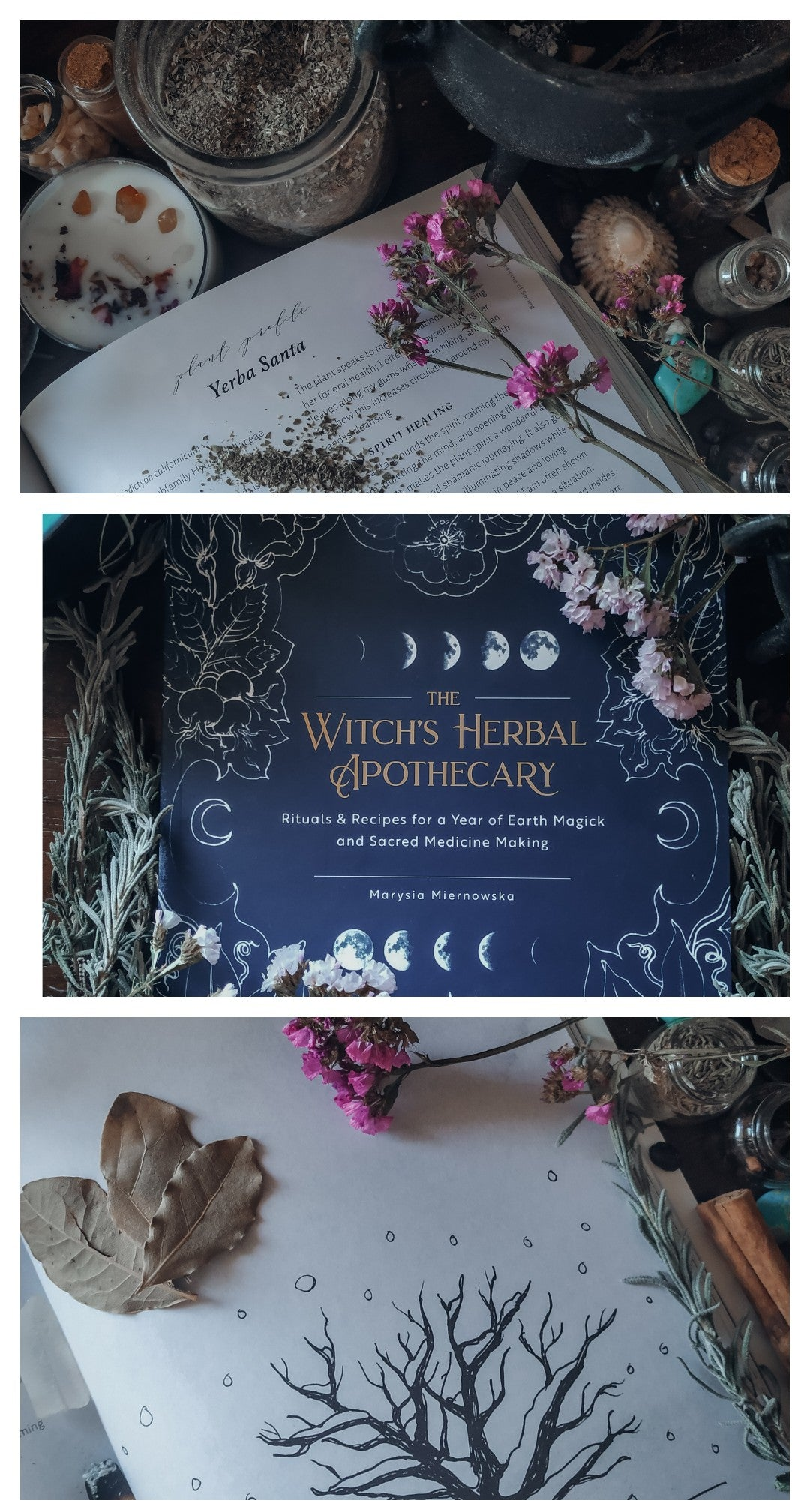 The Witch's Herbal Apothecary (Marysia Miernowska)