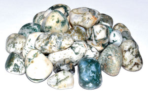 Tree Agate Tumbled Crystals (1lb)