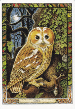 Load image into Gallery viewer, The Druid Animal Oracle Cards Deck & Book (Carr-Gomm & Carr-Gomm)