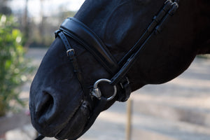 PS of Sweden Flying Change noseband