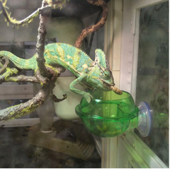 Suction Cup Reptile Feeder