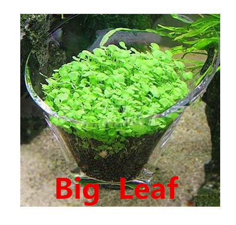 Easy Growing Aquarium Water Plant (Buy 1 get 2 FREE) - Animax Pet Shop