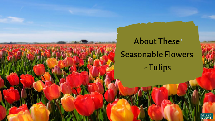 About These Seasonable Flowers - Tulips