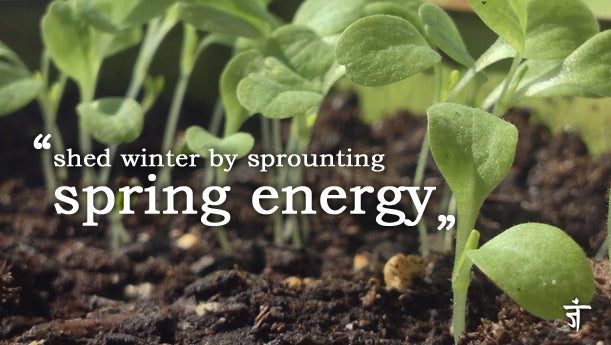 Bring spring energy to your home with an indoor garden. Namaste
