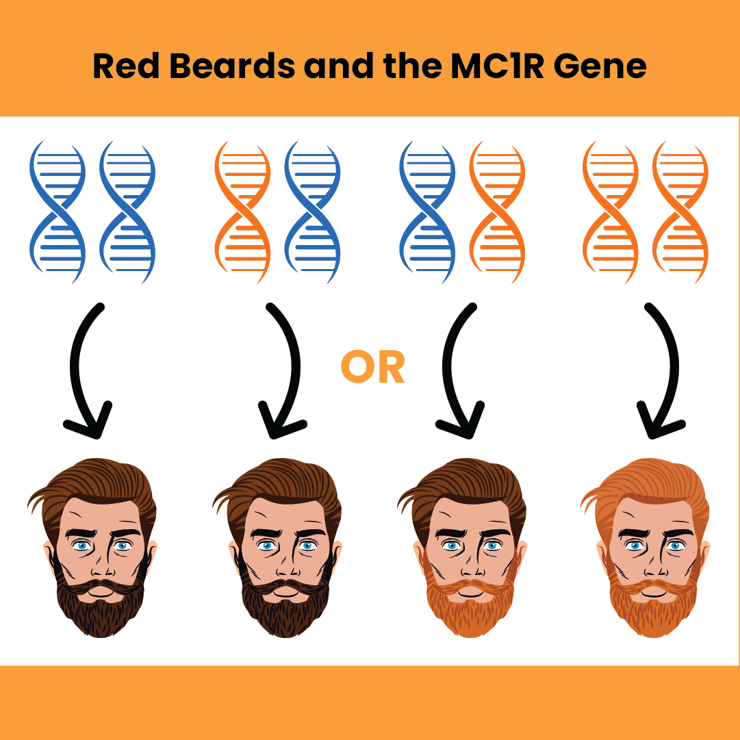 Why Is My Beard Turning Red?