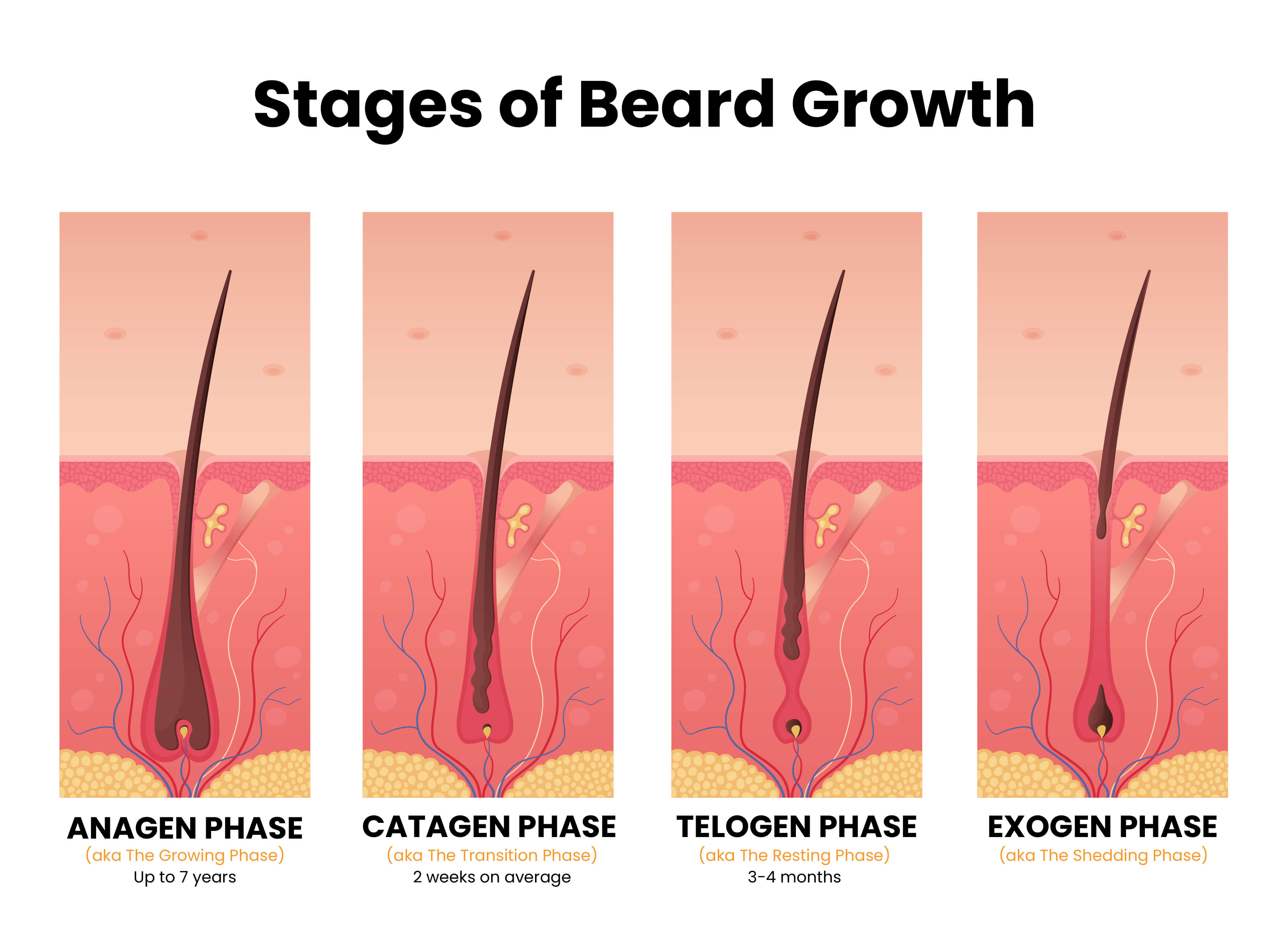 Stages of Beard Growth