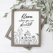 Bloom Where You Are Planted | St. Francis de Sales | Drawing