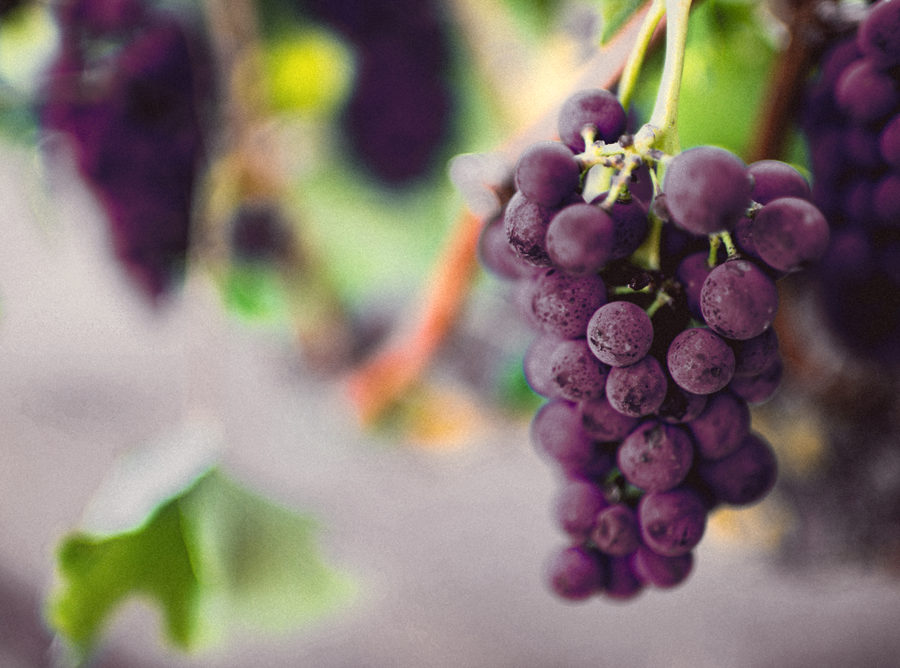 Australian Grape Colour