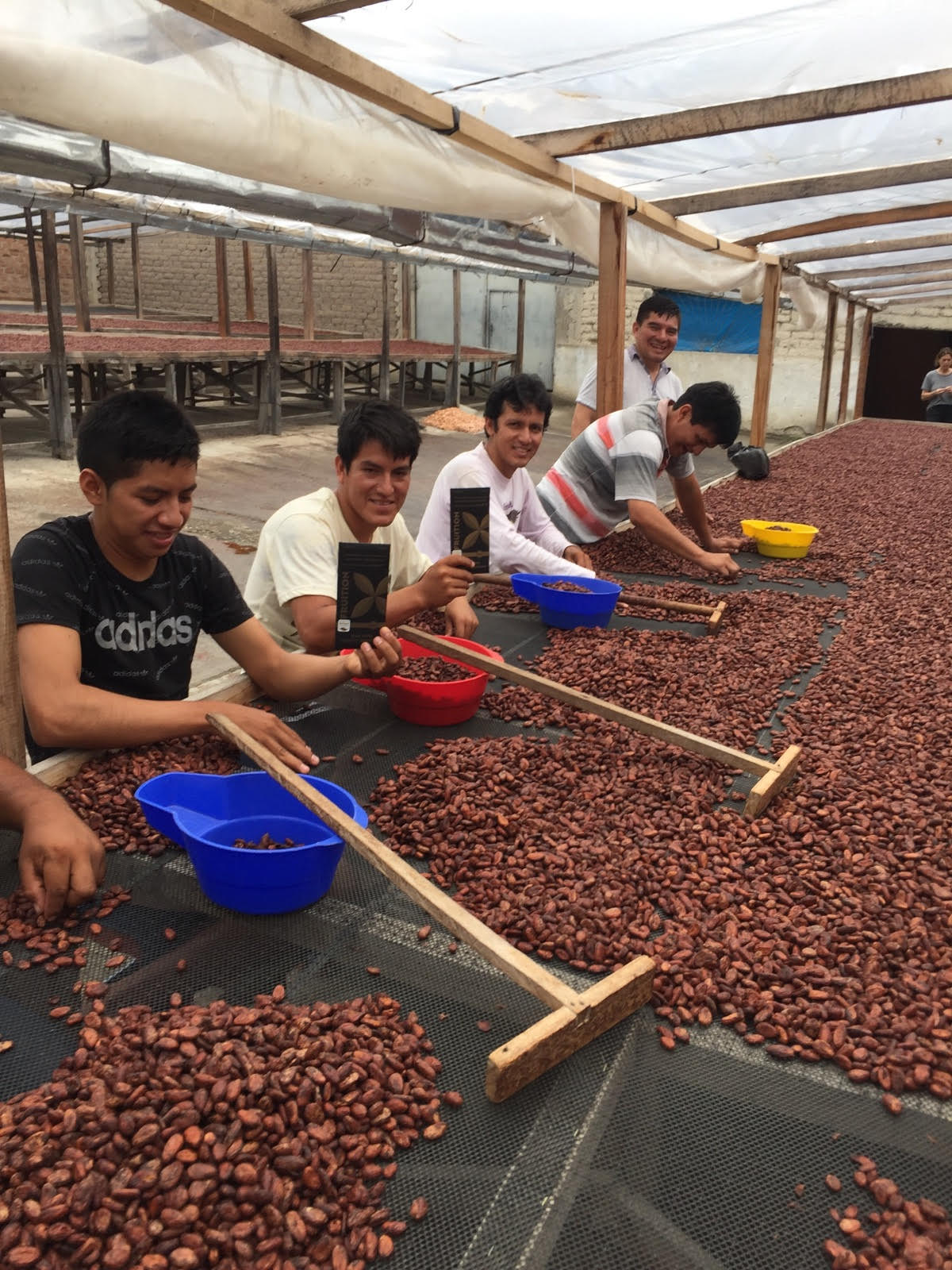 maranon cacao workers