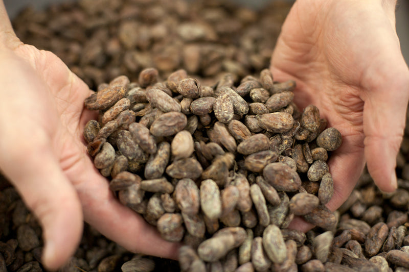 bean to bar process of roasting cocoa beans