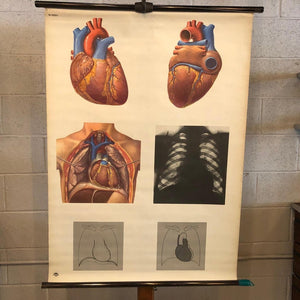 German Educational Heart Anatomy Chart