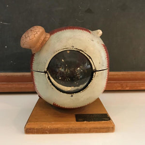 Mounted Eyeball Model