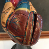 Mounted Heart Model