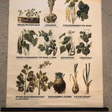 German Educational Vegetable Botanical Roll-Up Chart