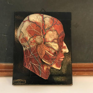 Anatomical Head on Plaque