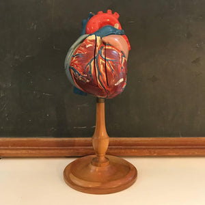 Heart Model on Stand