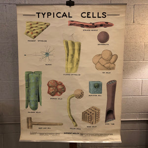 Educational Micro-Biology Chart By Sargent-Welch Scientific Company