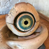 Anatomical Eye Model By New York Scientific Supply Co.