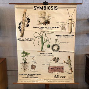 Educational Zoological Symbiosis Wall Chart By New York Scientific Supply Co