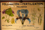 Pollination Fertilization