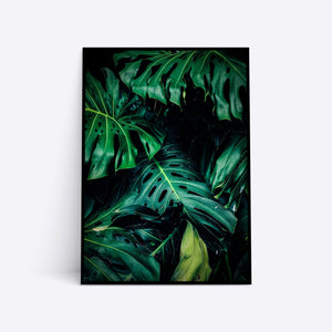 Monstera Jungle plante plakat i ramme