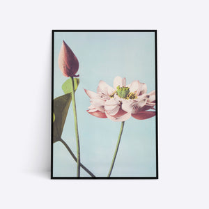 Illustrated Flower illustration plakat i ramme