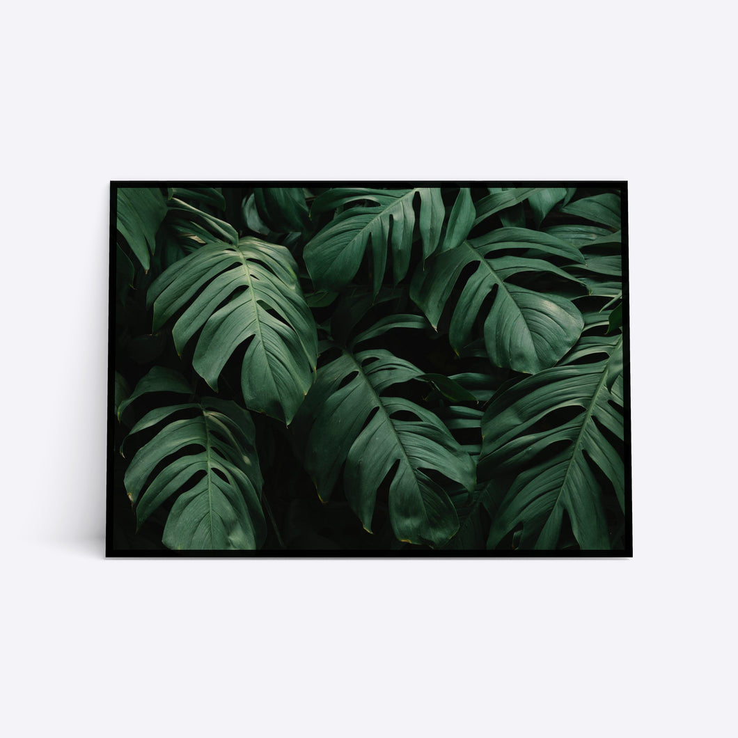 Monstera Leaves plante plakat i ramme