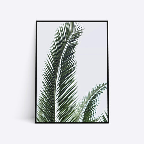 Mexican Palm plante plakat i ramme