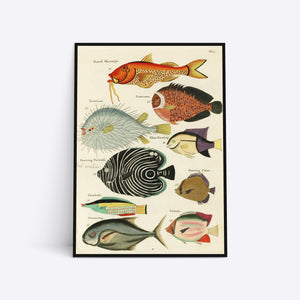 Know Your Fish illustration plakat i ramme
